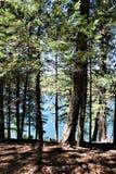 Lac canyon en bois, le comté de Coconino, Arizona, Etats-Unis Photographie stock libre de droits