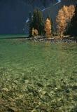 Lac Chester avec des mélèzes d'automne Images libres de droits