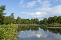 Lac chez Duinen van Oostvoorne photographie stock