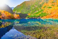 Lac cinq flower Photos libres de droits