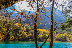 Lac cinq flower, Jiuzhaigou, au nord de province de Sichuan, la Chine image stock