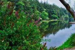 Lac Coffenbury au fort Stevens State Park en Orégon images libres de droits