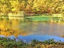 Lac coloré entouré avec les arbres colorés de la nature d'automne photographie stock libre de droits