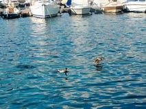 Lac Como Photos stock