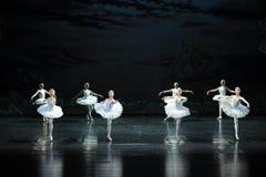 Lac confus swan de Lakeside-ballet de cygne de cygnes-Le Image stock