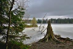 Lac congelé dans les bois Image stock