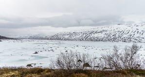 Lac congelé Norvège image libre de droits