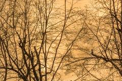 Lac congelé par les arbres Images libres de droits