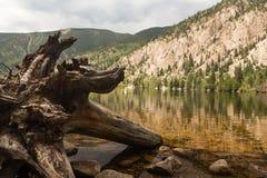 Lac cottonwood près de Buena Vista le Colorado Photo libre de droits