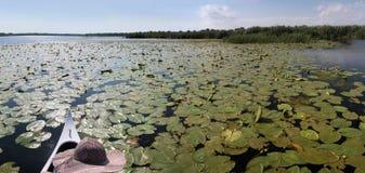Lac Cuibida d'†de delta de Danube « Images libres de droits