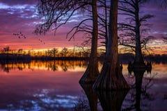 Lac cypress, coucher du soleil scénique, l'Illinois du sud Photos libres de droits
