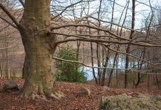 Lac d'arbre, d'automne et d'hiver de montagne Images libres de droits