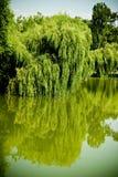 Lac d'arbre de saule photographie stock libre de droits