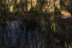 Lac d'oxbow reculé au printemps River Valley image stock