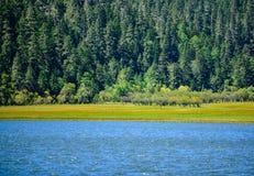 Lac dans la forêt image stock