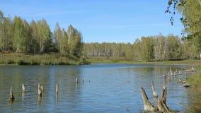 Lac dans la forêt banque de vidéos