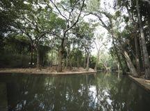 Lac dans la forêt photos stock