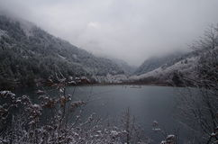 Lac dans la forêt d'hiver Image stock