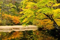 Lac dans la forêt profonde Images libres de droits
