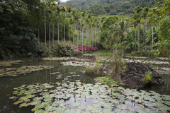Lac dans la forêt tropicale photographie stock