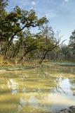 Lac dans la jungle du Népal (Chitwan). photographie stock