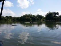 Lac dans la réserve d'oiseaux images stock