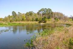 Lac dans le cordon de marais de la Floride images libres de droits