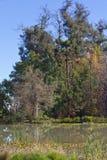 Lac dans le jardin Image libre de droits
