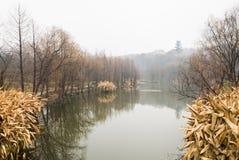 Lac dans le jardin Photographie stock libre de droits