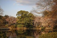 Lac dans le jardin national de Shinjuku Gyoen japan photo libre de droits