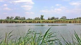 Lac dans le jour ensoleillé banque de vidéos