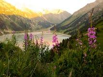 Lac dans les montagnes avec des fleurs images stock