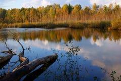 Lac dans un bois. Photographie stock libre de droits
