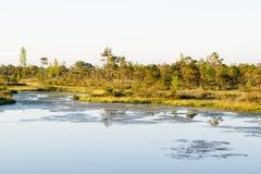 Lac dans un marais Image libre de droits