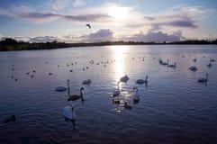 lac de ballyhonock photographie stock