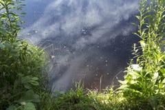 Lac de bouillonnement de forêt de l'eau un jour chaud d'été Images stock