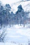 Lac de forêt d'hiver Image libre de droits