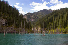 Lac de montagne de Kaindy dans Kazakhstan photos libres de droits