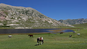Lac de Nino , Corsica Royalty Free Stock Photo