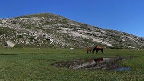 Lac de Nino , Corsica Royalty Free Stock Images
