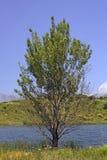 Lac DE Padula (Padula-meer) dichtbij het bergdorp Oletta in het Nebbio-gebied, Noordelijk Corsica, Frankrijk Royalty-vrije Stock Fotografie