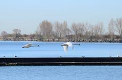 Lac de paysage d'Ontario Photos stock
