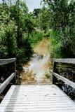 Lac de roseau de marécage inondé par route de marée haute Photos stock