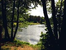 Lac derrière les arbres dans un jour ensoleillé d'été image libre de droits