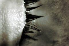 Lac des larmes images stock