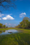 Lac desséché le jour ensoleillé d'été Photographie stock