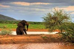 Lac elephant Photo libre de droits