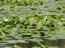 Lac Eminescu Photographie stock