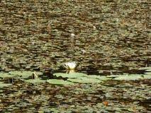 Lac Eminescu Images libres de droits