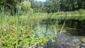 Lac Eminescu Photos stock